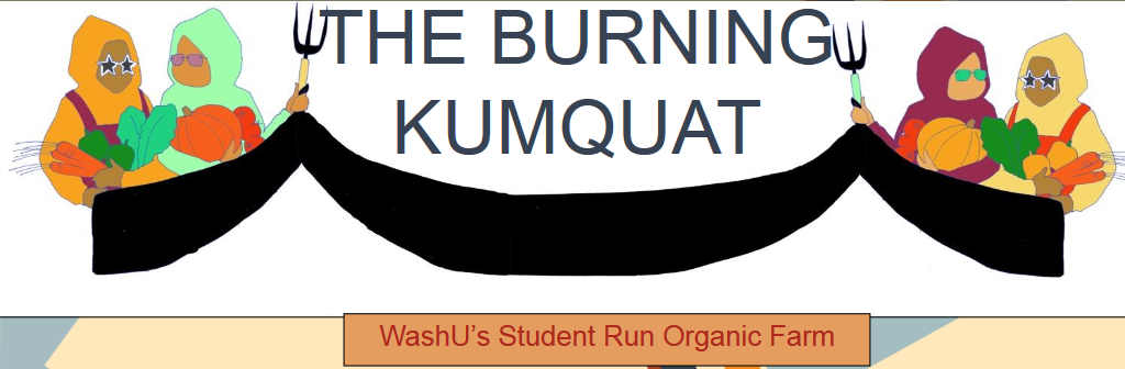 burning kumquat title