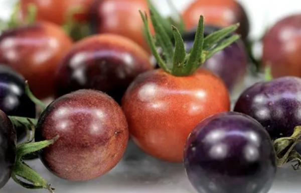 Cherry Tomatoes (Variety Mix)